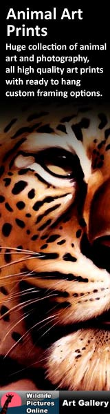 wildlife artwork from wildlife pictures art gallery