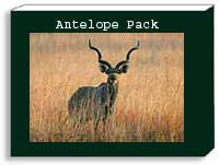 antelope photo pack
