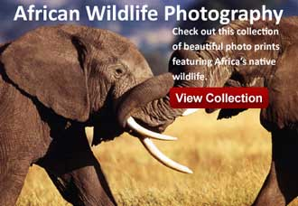 African wildlife photography prints and posters