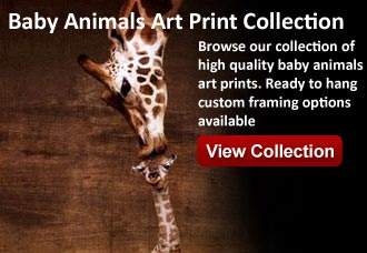 baby animals artwork from wildlife pictures art gallery