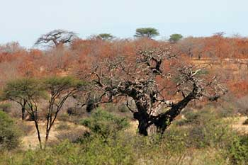 Winter colors in Ruaha National Park, Tanzania