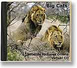 Big Cats virtual cd