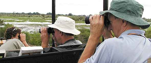 Using binoculars for wildlife viewing