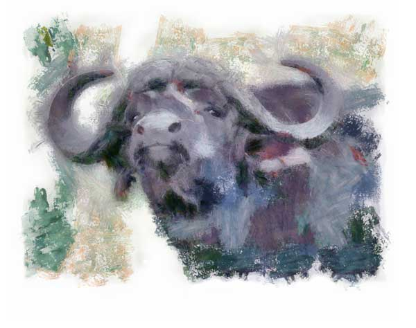 Buffalo bull staring agressively in impressionist style