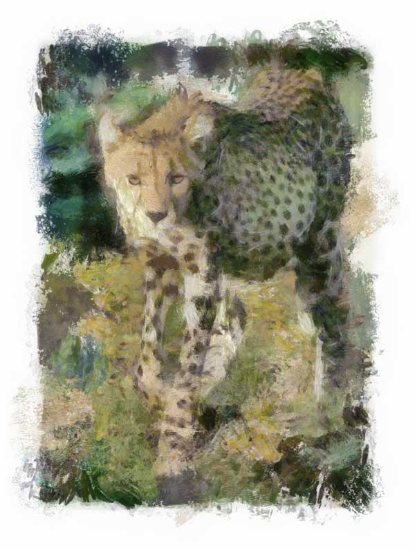 Cheetah walking with full belly, impressionist style