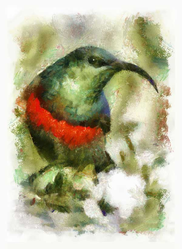 Southern double-collard sunbird, impressionist look