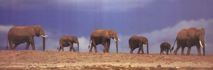 Elephant herd, Kenya, art print