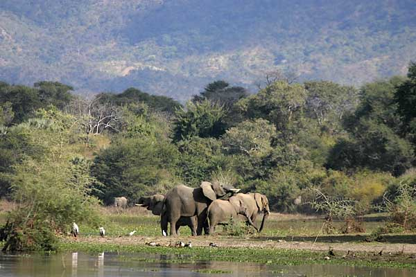 Elephant family on riverbank