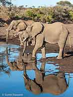 Elephant group at waterhole