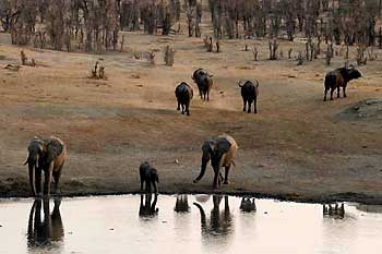 Elephants at waterhole, Hwange National Park, Zimbabwe
