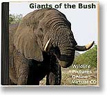 Giants of the Bush virtual cd