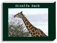 Giraffe Photo Pack