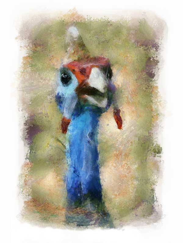 Helmeted guineafowl, impressionist style