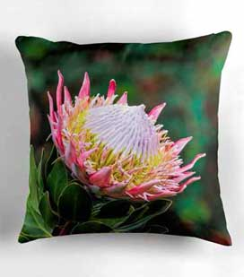 king-protea-pillow