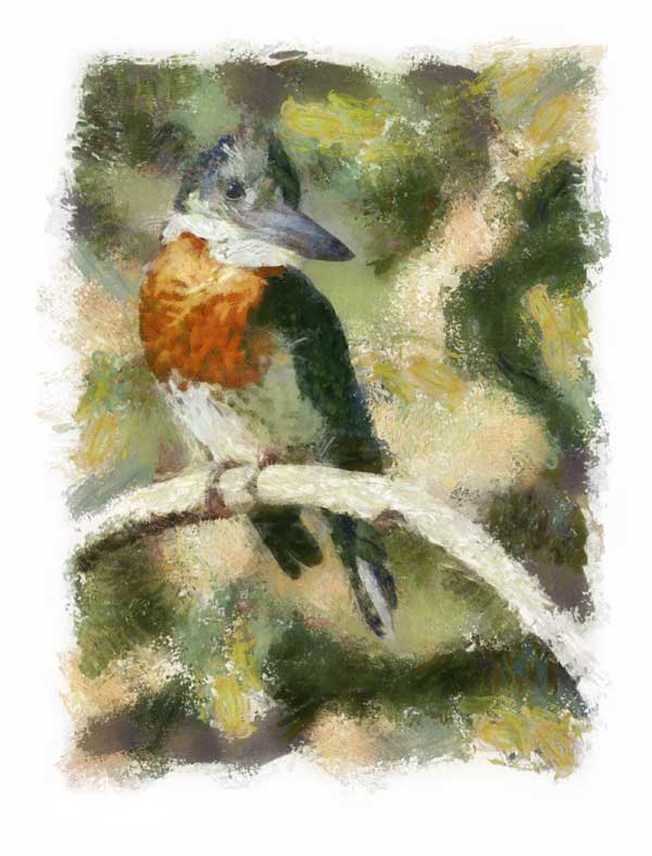 Giant kingfisher rendered impressionist style