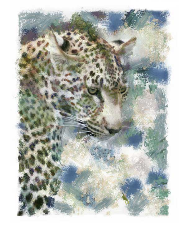 Portrait of Leopard looking downwards, digitally painted
