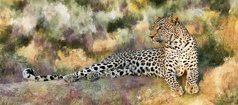 Leopard relaxing on hillock, Sabi Sand Game Reserve, South Africa