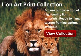 Lion artwork from wildlife pictures art gallery