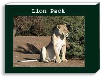 Lion Photo Pack