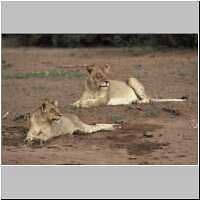 Lioness and cub lying in dry riverbed