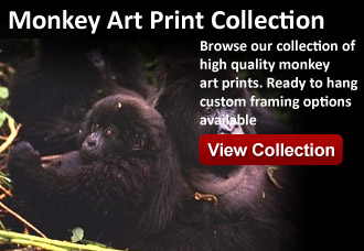 monkey art from wildlife pictures art gallery