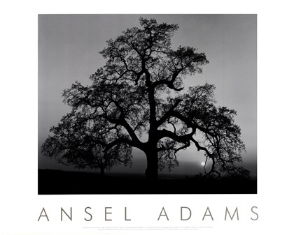 Ansel adams black and white print of oak tree