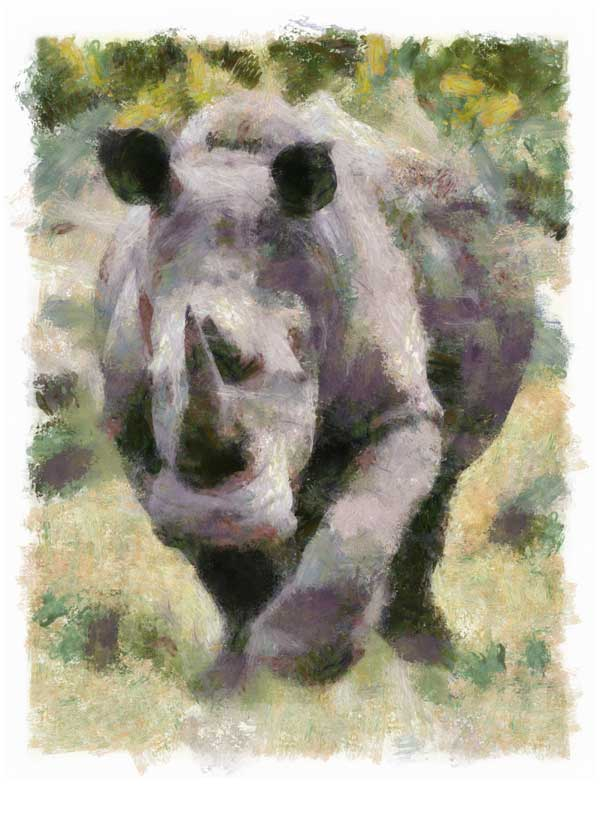 White rhino on the charge, digitally painted