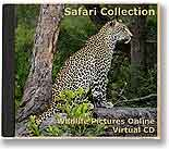 Safari Collection VCD cover
