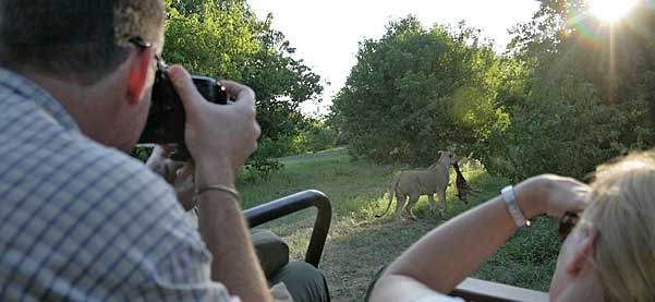 Photographer taking safari photo