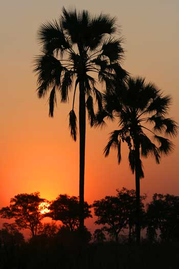 Sunset in Okavango Delta, Botswana