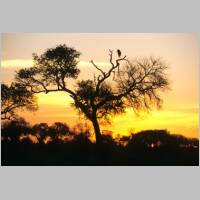 Kruger Park at sunset