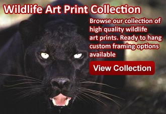 Wildlife art from wildlife pictures art gallery