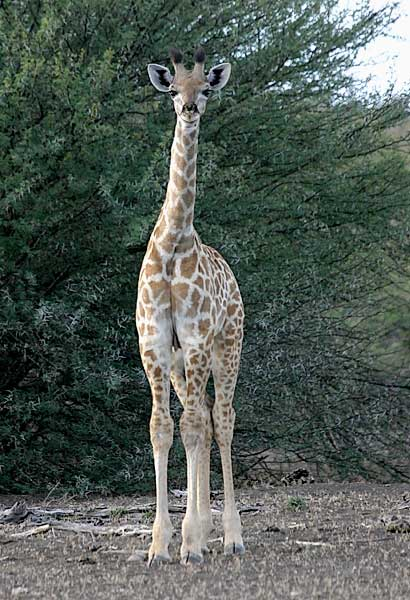 Photo of baby giraffe