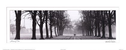 Art print of avenue of trees in black and white