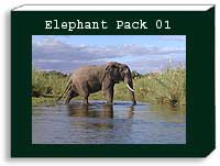Elephant photo pack