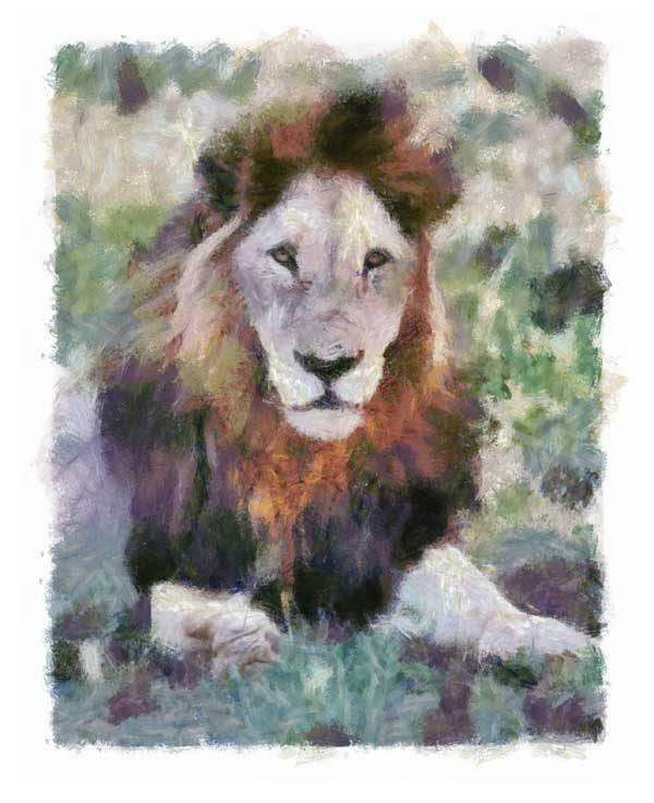 Old male lion given look of Impressionist painting