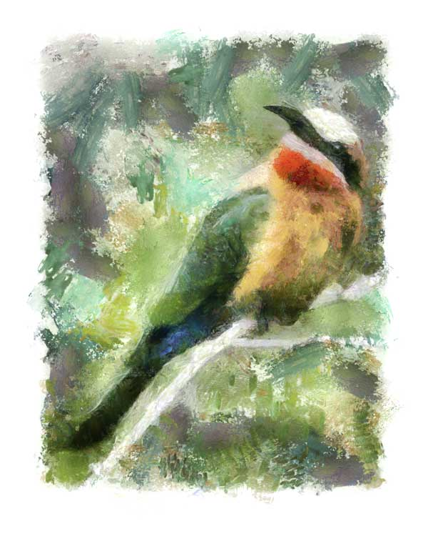 White-fronted bee-eater as digital painting