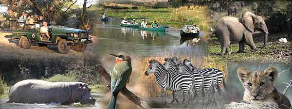 Zambezi Safari Activities