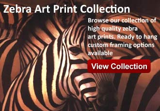 zebra art from wildlife pictures art gallery