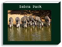 zebra photo pack